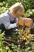 Kleiner Junge leert Körbchen mit Kartoffeln
