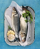 Two fresh sea bass on baking tray