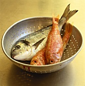 Red snapper and bream in colander