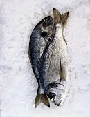 Two sea bream on crushed ice