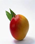 Mango mit Blättern