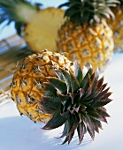 Baby pineapple (Ananas comosus)
