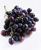 Black grapes, variety: Palieri (Vitis vinifera), Italy