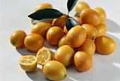 Kumquats, variety: Moyen (Fortunella margarita) from Morocco