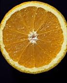 Slice of orange (Citrus sinensis)