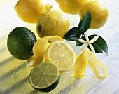 Lemons (Citrus limon) and limes (Citrus aurantiifolia)