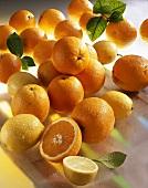 Oranges and lemons (Citrus sinensis, Citrus limon)