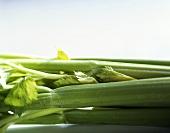 Celery (Apium graveolens var. dulce)