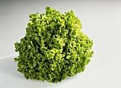 Cabbage lettuce (Lactuca sativa var. capitata)