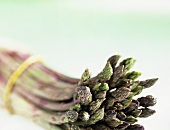 Purple & green asparagus (Asparagus officinalis) from Italy