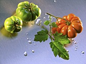 Green tomatoes and red tomato with leaf