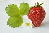 A strawberry with flower and leaf