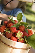 Strawberries in wooden bucket, small girl behind