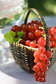 Redcurrants with leaves in a basket
