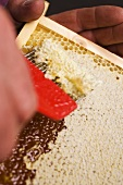 Removing the wax cappings from a honeycomb