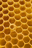 Honeycomb (detail)