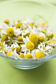 Chamomile flowers in glass bowl