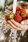 Hände halten Erdbeeren unter Wasserstrahl
