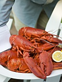 Person serving lobsters with lemons on platter (USA)