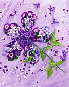 Blume aus Hyazinthen, Aschenblume, Traubenhyazinthen, Jasmin