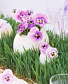 Pansies in egg vases on wheat grass table runner