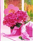 Pink hydrangea in flowerpot for birthday