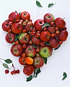 Heart of red apples and ornamental apples