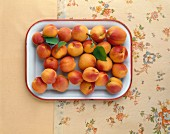 Fresh apricots from the Wachau (Austria) on tray