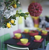 Lemon tree in front of laid table