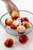 Hand taking a nectarine out of a wire basket