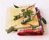 Sage leaves on wooden bowl and kitchen cloth