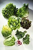 Various types of salad leaves