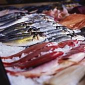 Fish at the market