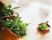 Still life with fresh herbs