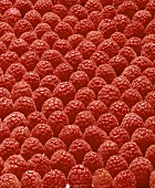 Raspberries (filling the picture)