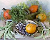 Still life with beans, pumpkins and herbs