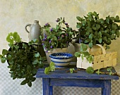 Still life with mint, lungwort and basil