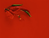 Chili peppers on red background