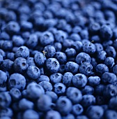 Blueberries (filling the picture)