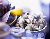 Still life with molluscs and shellfish