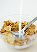 Pouring milk over cornflakes