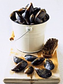 Mussels with brush