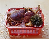 Fresh shellfish (sea urchin, crab etc.) in basket