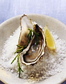 Oysters on sea salt