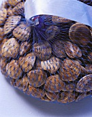 Clams in net