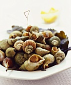 Cooked whelks