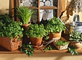 Herb pots on a window sill