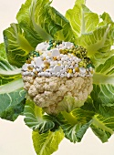Natural and synthetic vitamins: cauliflower and tablets