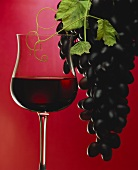 A glass of red wine with grapes