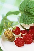 Ripe and unripe raspberries